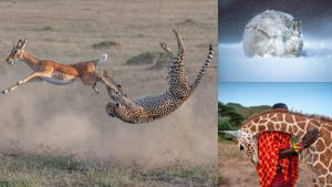 10 impresionantes fotografías de la naturaleza ganadoras de concurso mundial