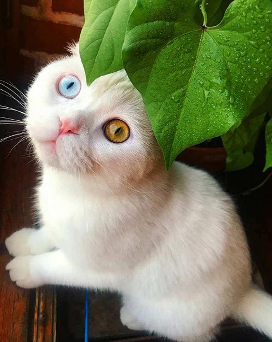 Gato colores_04