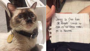 Gato con doble vida: Tiene dos casas, dos nombres y dos dueños