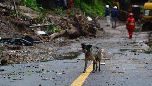 Oso, la mascota que busca a sus dueños desaparecidos en el derrumbe de Santo Tomás