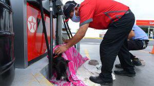 Trabajadores de gasolinera brindan cobija y cariño a caninos durante la lluvia