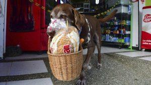 Eros, el perrito repartidor que protege a sus vecinos del COVID-19 en Colombia