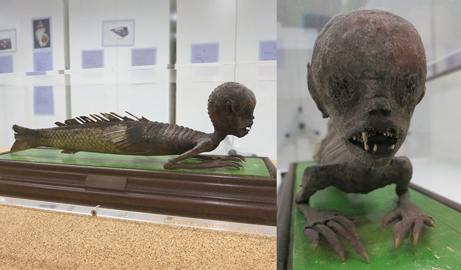 Objeto7.-Museo-Natural-de-Ciencia