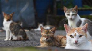 Una manada de gatos: los nuevos inquilinos del balneario Los Chorros
