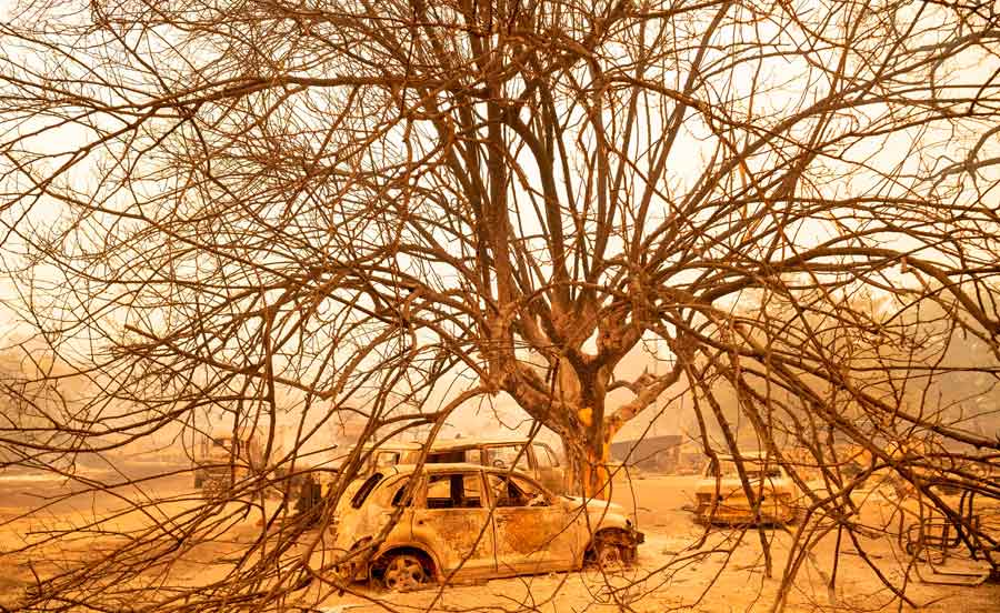 TOPSHOT - Burned out vehicles sit under a burned tree at a residence