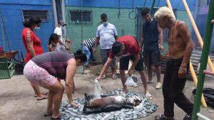 Tristeza e indignación por la muerte de la mascota Roco a manos de un policía
