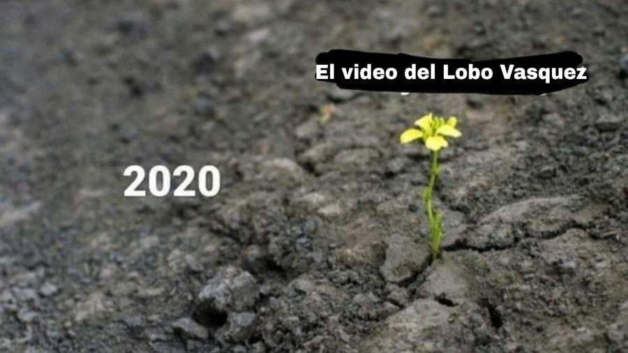 lobo7