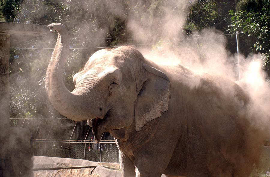 Elefante_03-