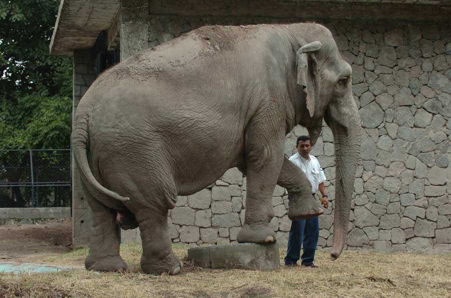 Elefante_06-