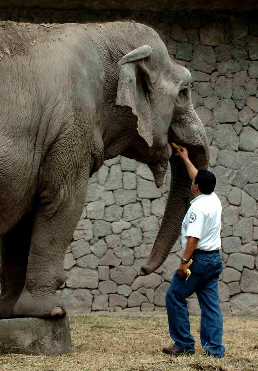 Elefante_07-