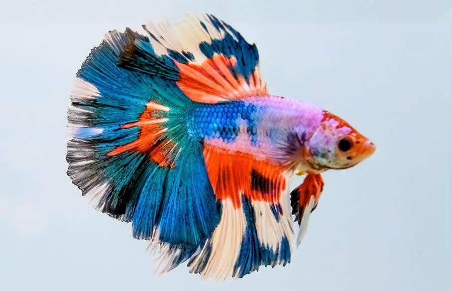 THAILAND-FISH-EXPO
