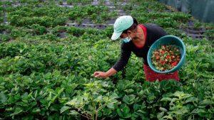 Estas mujeres diversifican la agricultura en cordillera salvadoreña
