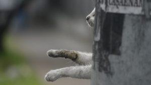Salvajismo: un gato fue colgado en un poste en pleno centro de San Salvador