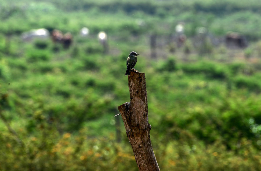 HONDURAS-ENVIRONMENT-DROUGHT-LAGOONS