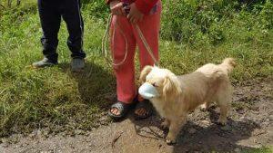 Mascota con tapabocas en jornada de vacunación se roba los likes en las redes