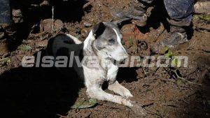 Mascota permanece en la zona donde socorristas buscan a pareja en deslave de Nejapa