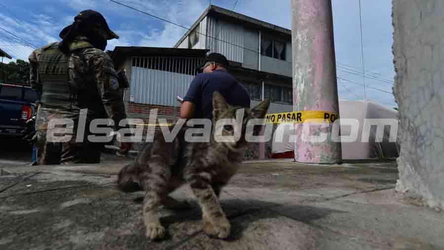 gatito-en-escena-de-soyapango002