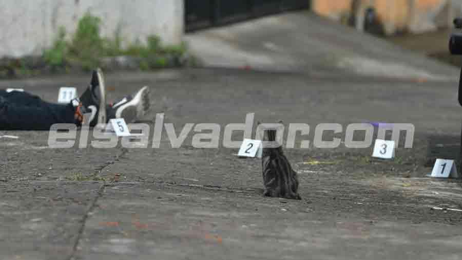 gatito-en-escena-de-soyapango005