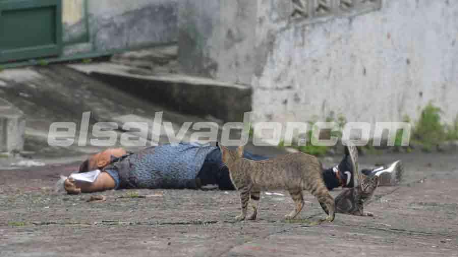 gatito-en-escena-de-soyapango007