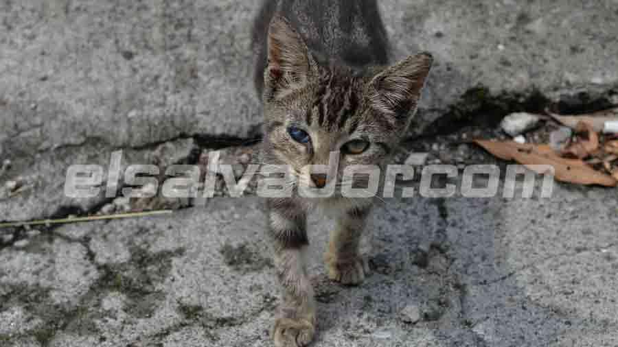 gatito-en-escena-de-soyapango008