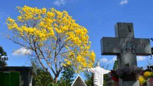 El colorido de los árboles florales que embellece el paisaje en Sonsonate