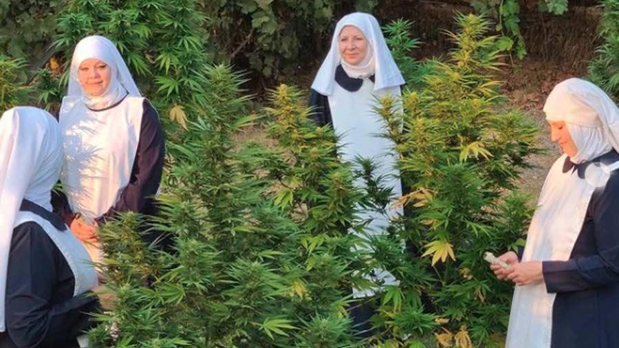 monjas-con-negocio-de-marihuana10
