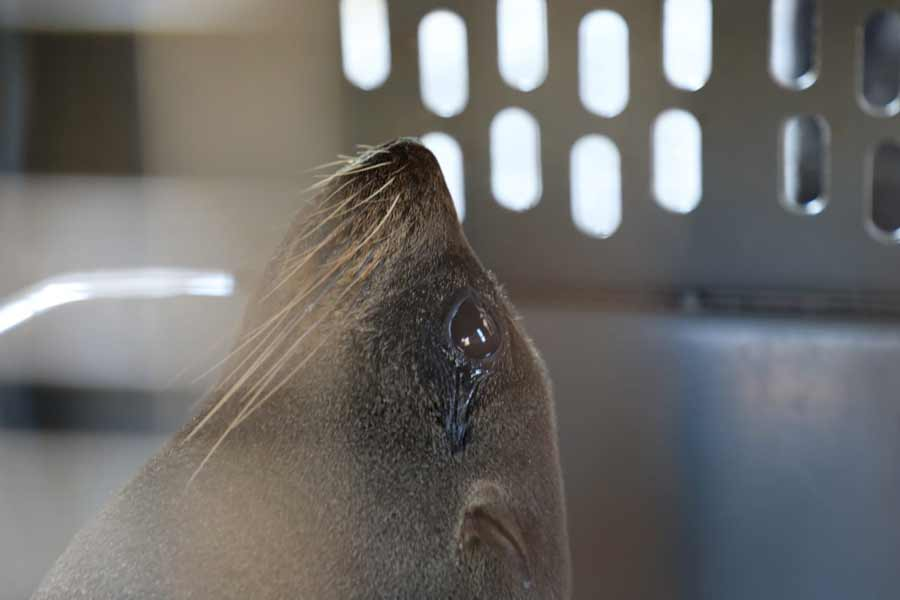 leon marino costa El Salvador_03
