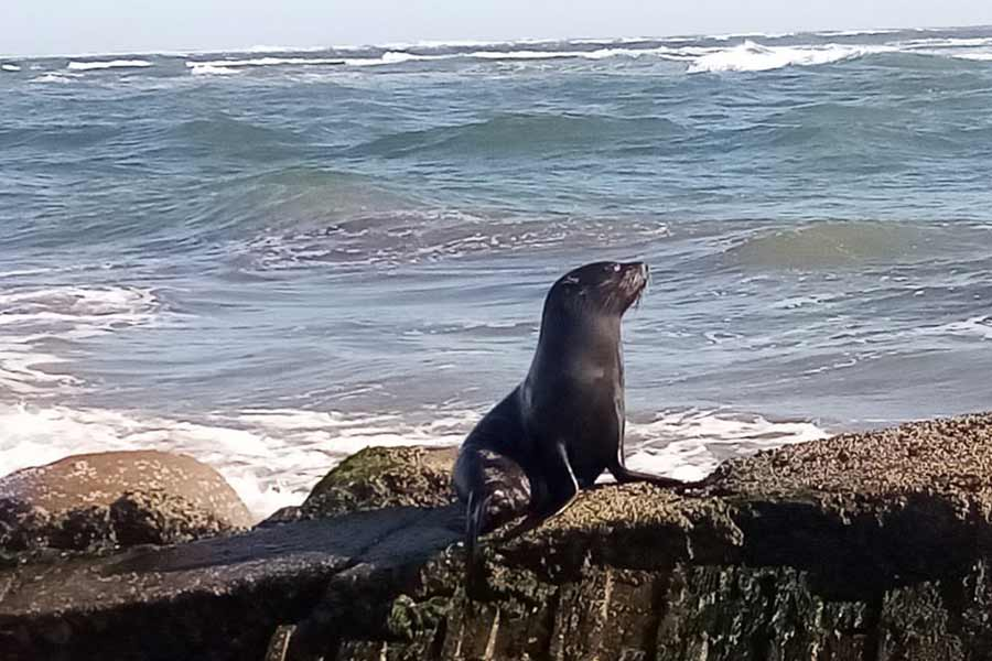 leon marino costa El Salvador_05
