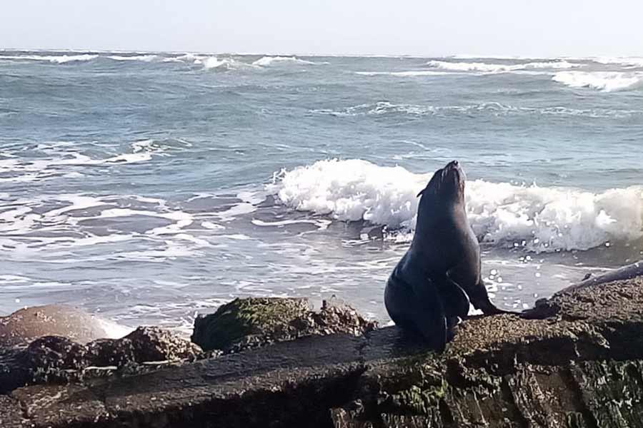 leon marino costa El Salvador_06