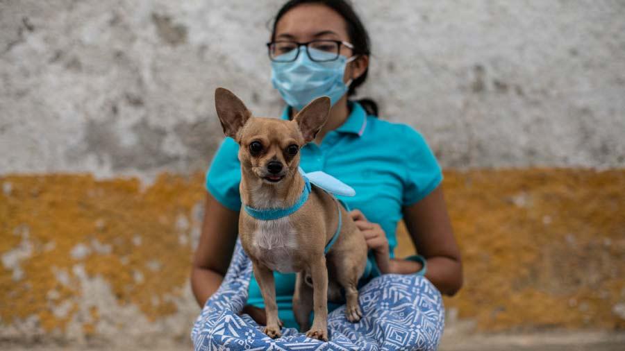 San Lazaro protege a los perros en Nicaragua01