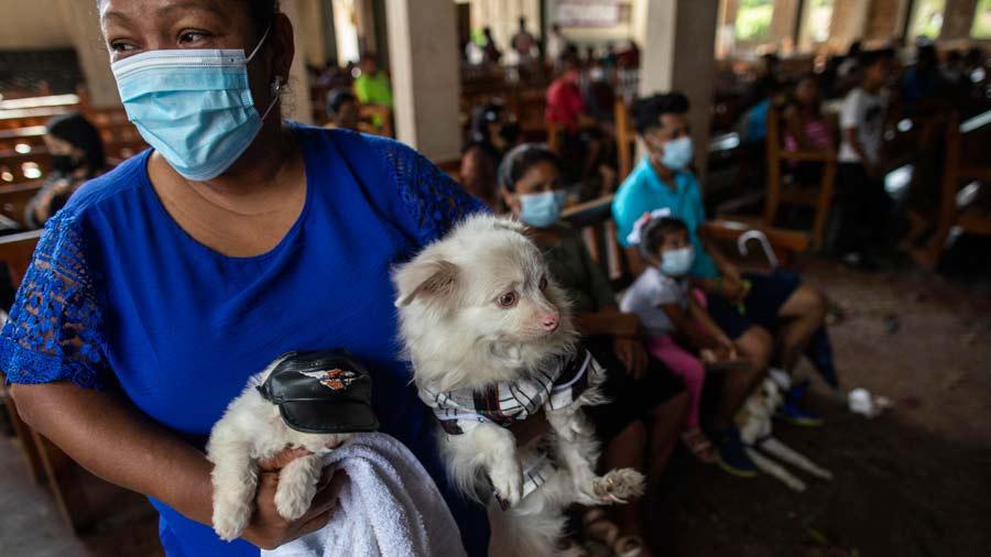 San-Lazaro-protege-a-los-perros-en-Nicaragua02