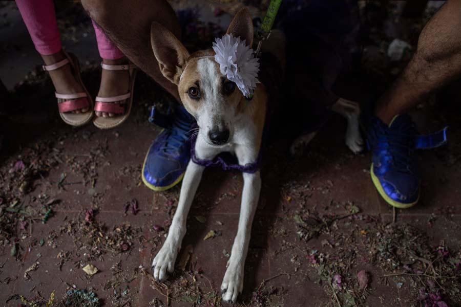 San Lazaro protege a los perros en Nicaragua03