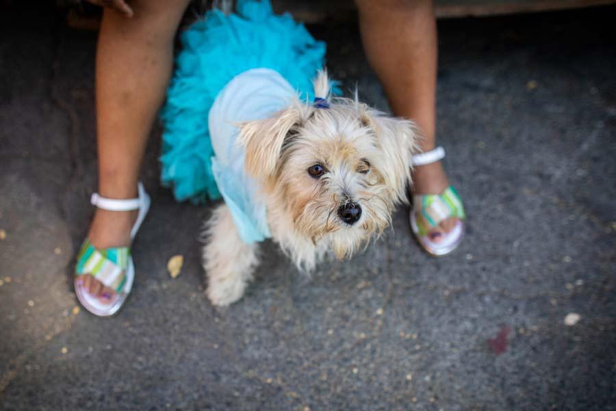 San Lazaro protege a los perros en Nicaragua07