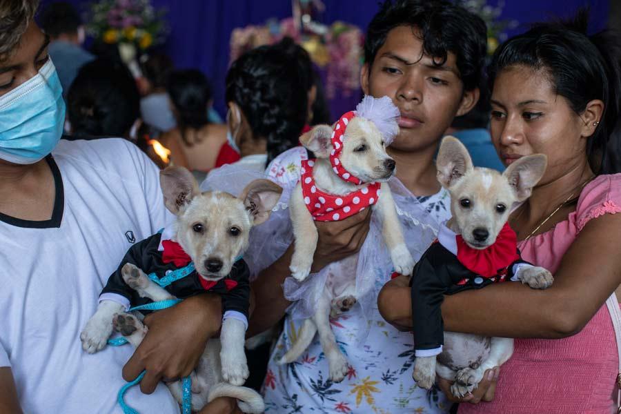 San Lazaro protege a los perros en Nicaragua10