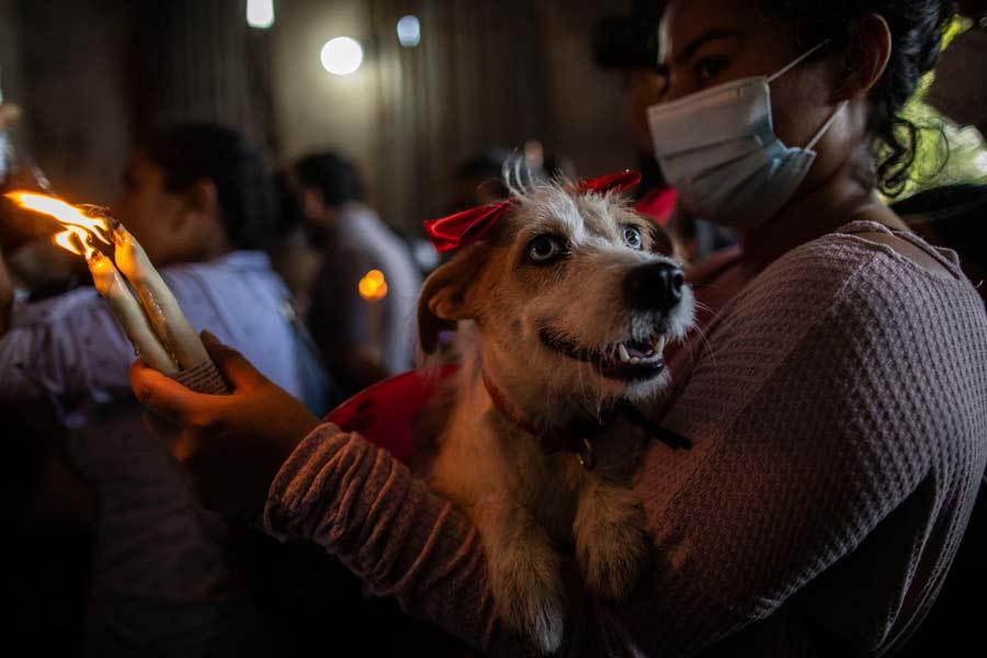 San Lazaro protege a los perros en Nicaragua11
