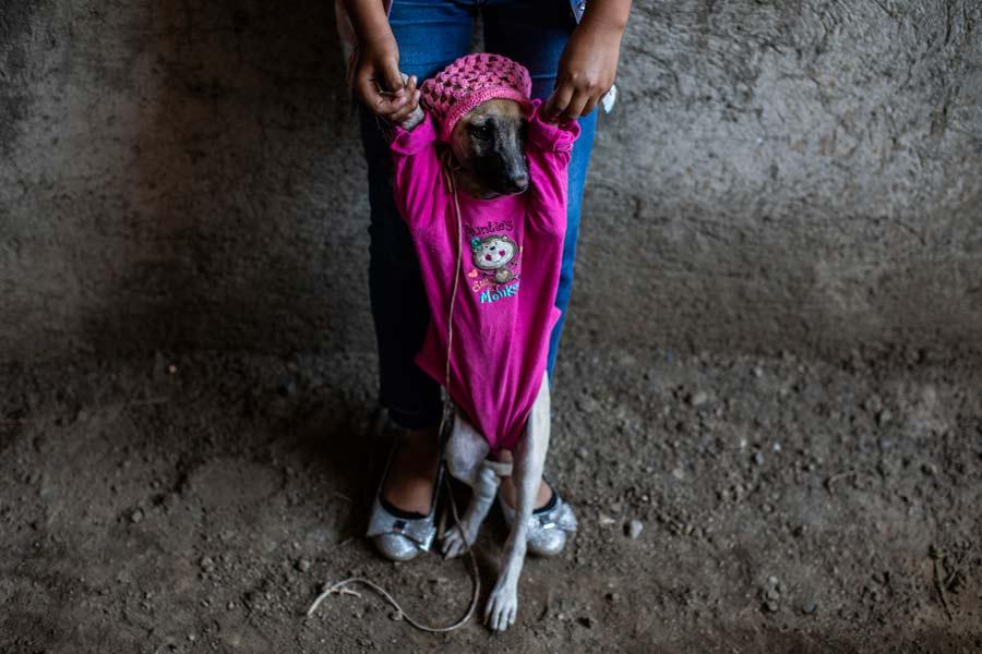 San Lazaro protege a los perros en Nicaragua12
