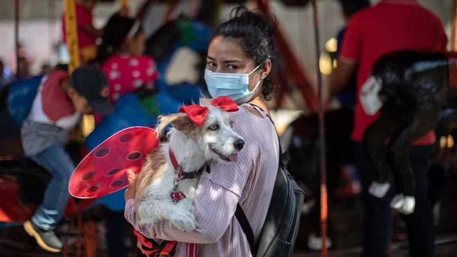San Lazaro protege a los perros en Nicaragua13