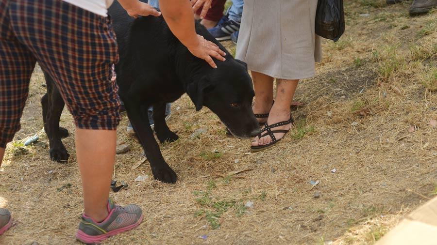 Zeus el perro que fue sobrevivio a la masacre de la colonia Scandia en Ayutuxtepeque