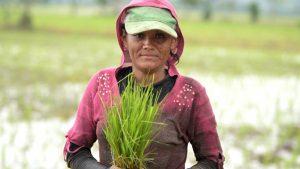 Guadalupe, la jornalera de Zapotitán que sostiene a su familia sembrando arroz