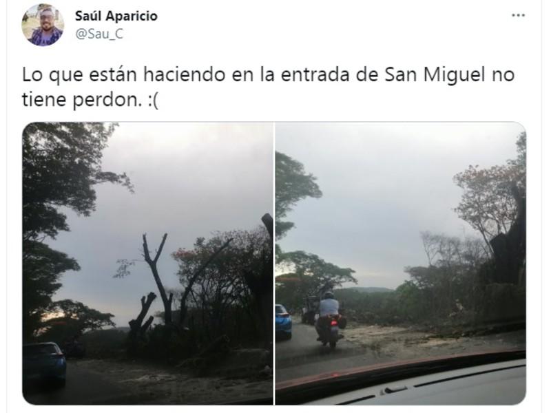 arboles San Miguel 8
