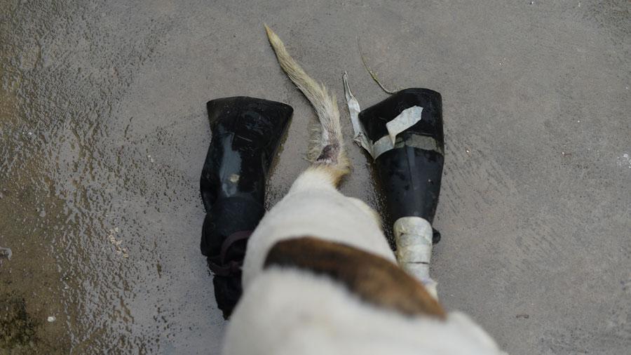 perrito-de-Ataco38
