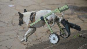 """""""Mucha gente me ha dicho dormilo"""", comenta dueño de perrito que fue atropellado en Ataco"""