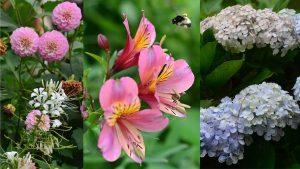 ¡Belleza natural! Estas son las flores que ponen color a las campiñas de San Ignacio, Chalatenango